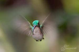 À tire d'aile